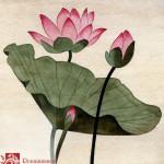 Lotus Blossom - 1 by Robert McIntosh